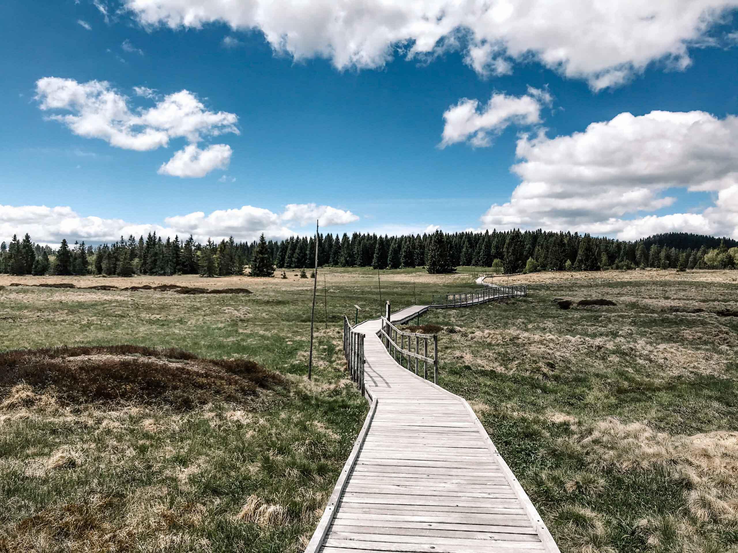 Božídarské rašeliniště - Krušné hory - Jiráci na cestách