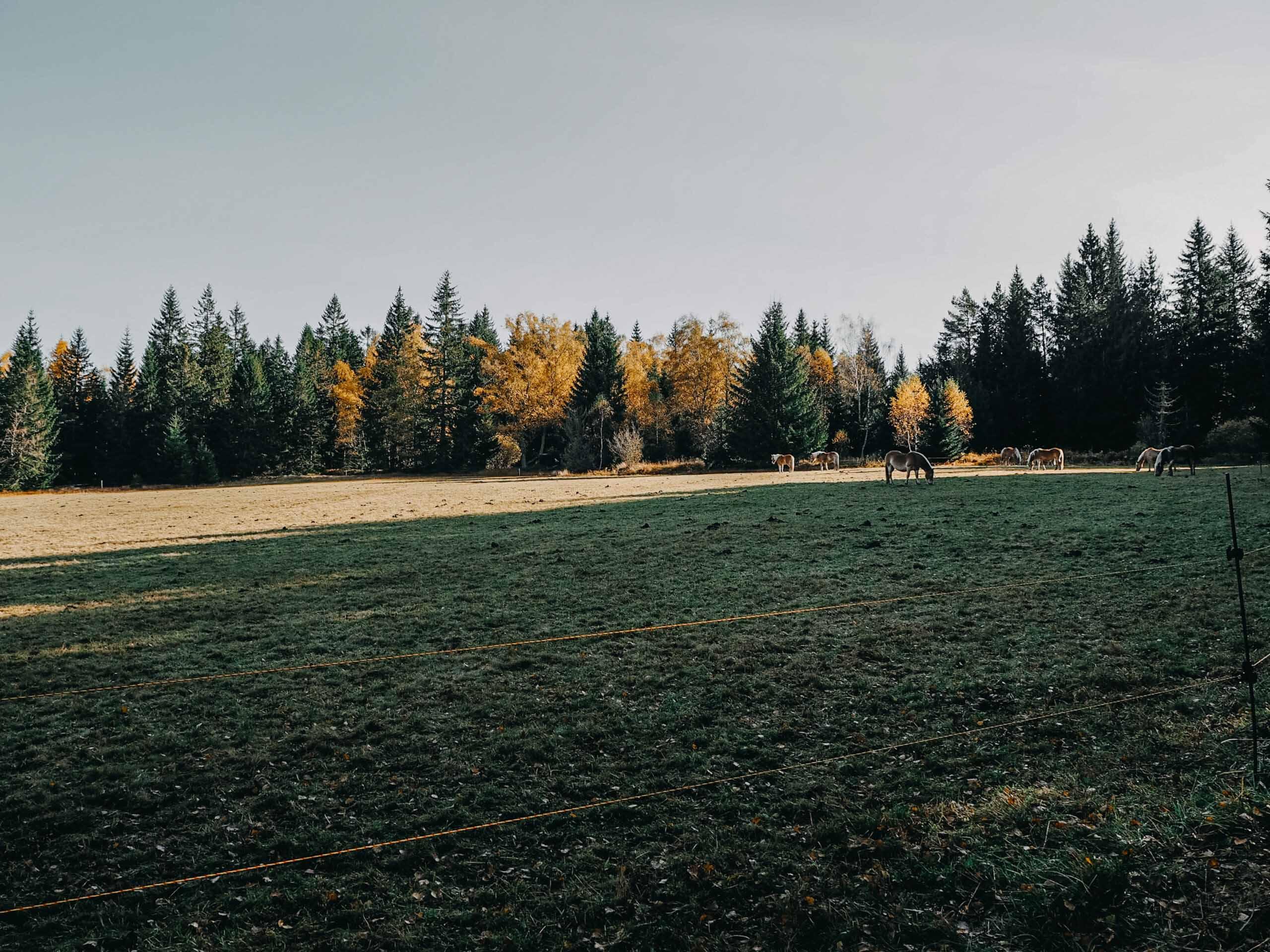 poledník šumava