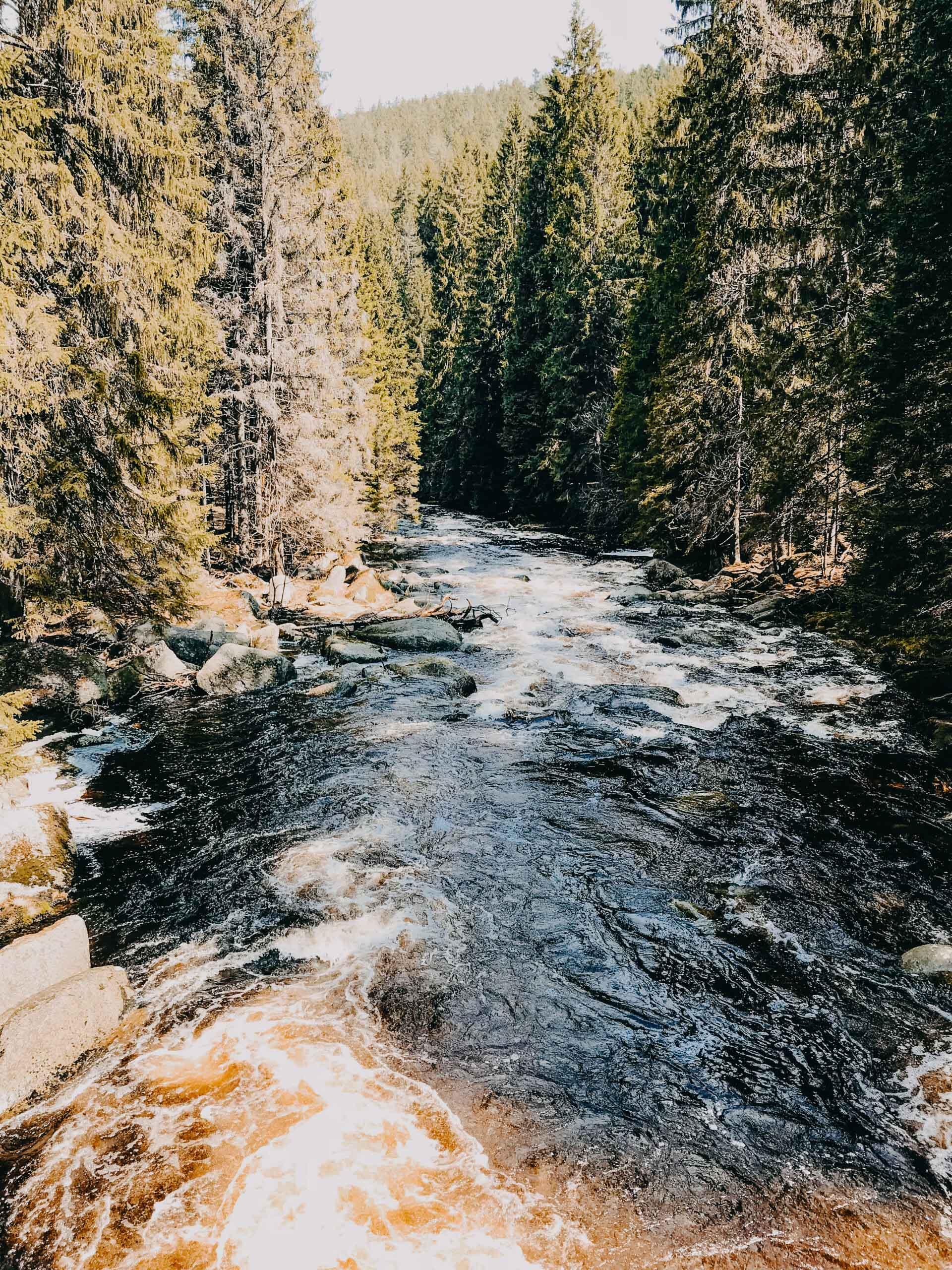 šumava modrava